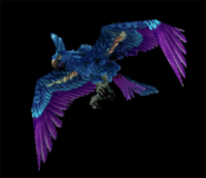 HyacinthMacaw