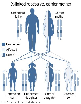 XlinkRecessive