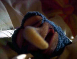 Eyelids.gonzo