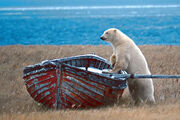 PolarBearBoat