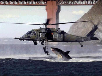 Shark Helicopter