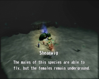 Reel20_Shearwig.png
