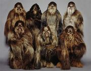WookieeWarriors