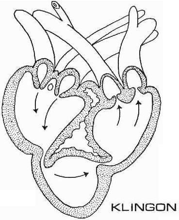 Mike Tyson Tattoos Blank Heart Diagram Blood Flow
