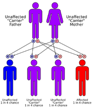 Autorecessive