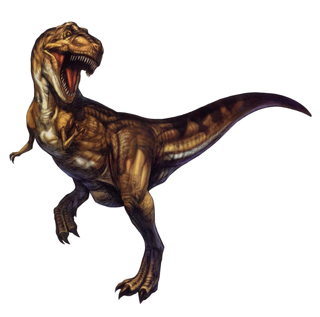 1031 x 1020 jpeg 96kBTyrannosaurus