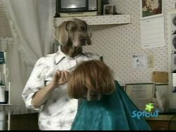 Wegmandogs.hairstylist