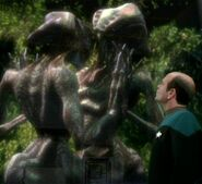Species 8472 courting