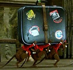 Ratbellhops