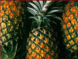 Pineapple3