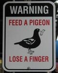 Don'tfeedpigeons