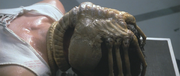 http://images2.wikia.nocookie.net/__cb20080712194334/avp/images/thumb/b/bb/Alien-The_Facehugger.png/180px-Alien-The_Facehugger.png