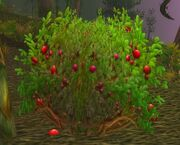 Mana Berry Bush