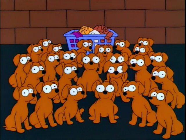 Contrabandistas de cachorros