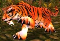 Young Stranglethorn Tiger