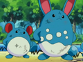 EP278 Marill y Azumarill.png