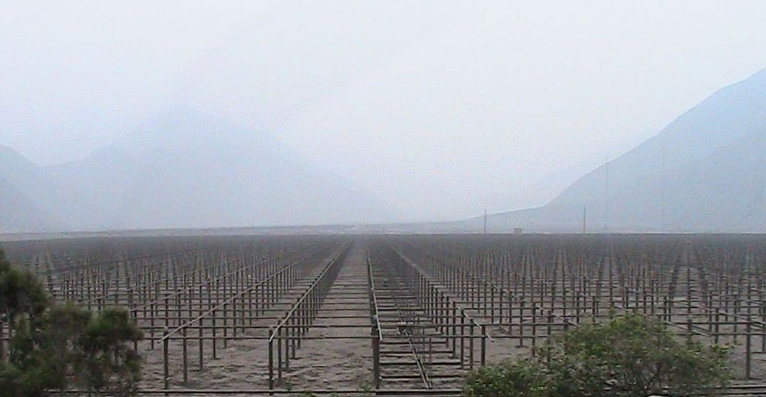 Jicamarca radar vineyard cropped