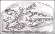 Original mosasaur illustr.
