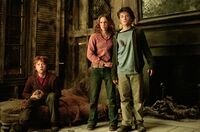 The Trio PoA