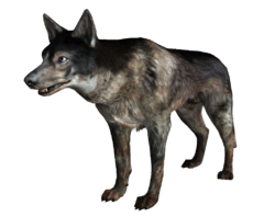 Dog FO3