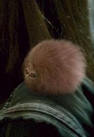 Pygmy Puff