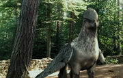 Buckbeak