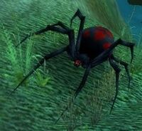 Black Widow Hatchling