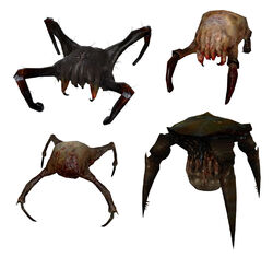 Headcrab models