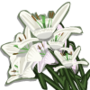 Lily-icon