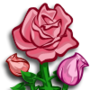 Pink Rose-icon