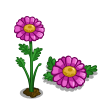 Pink Daisies-icon