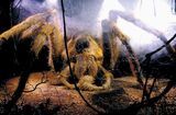Aragog 2