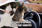 Fear and loathing cats