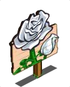 White Roses Mastery Sign-icon