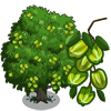 Arjuna Tree-icon