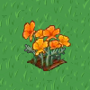 Perfect Golden Poppy-icon