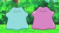 EP642 Ditto y Ditto brillante