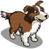 Bordercollie Chocolate-icon