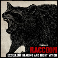 Raccoon rdr