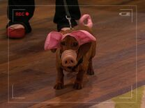 Robyn&#39;s Weiner-Dog-Pig