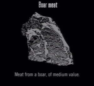 Animals Boar Meat