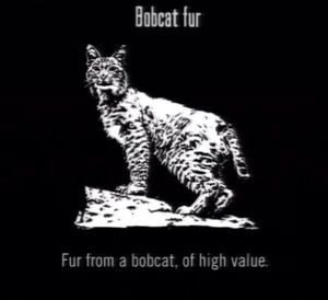 Animals Bobcat Fur
