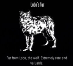 Animals Lobo Fur