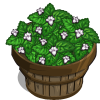 Lemon Balm Bushel-icon