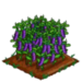Purple Podded Pea extra100