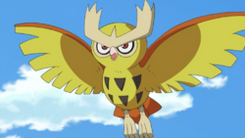 Ash&#39;s Noctowl