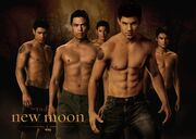 Jacob-Black-Wolf-Pack-taylor-lautner-7301791-1400-999