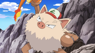 Ash Primeape
