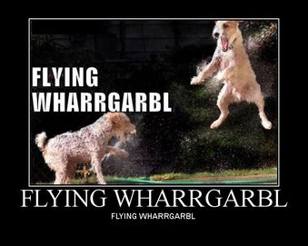Dangs new thread of funny and nice pics - Page 2 339px-Flying_wharrgarbl