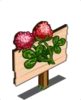 Red Clover Mastery Sign-icon